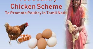 Free Country Chicken Scheme In Tamil Nadu