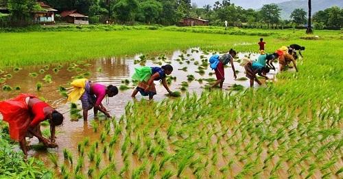 Farm Loan Waiver Scheme Jharkhand karj mafi